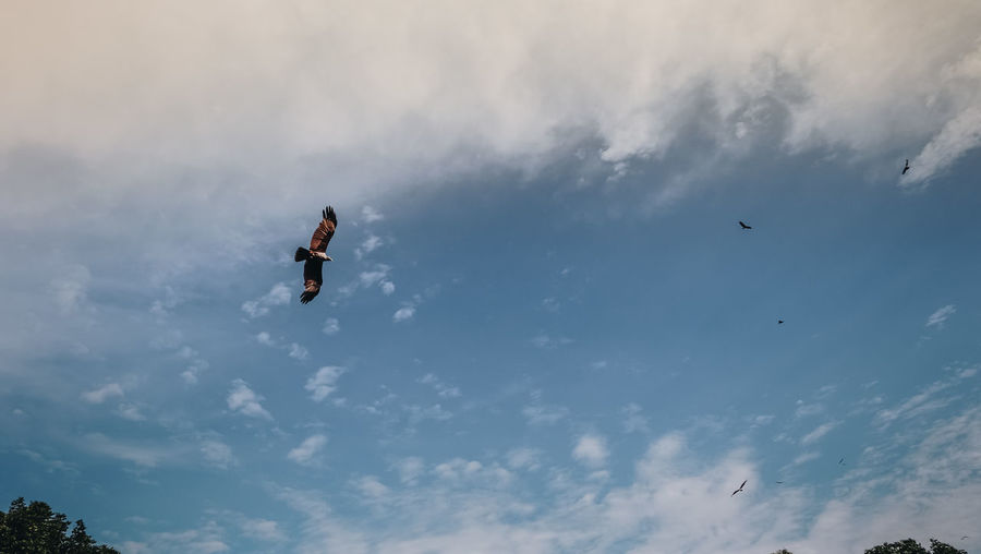 Animal Wildlife Animals In The Wild Beauty In Nature Bird Cloud - Sky Day Flying Low Angle View Motion Nature Sky