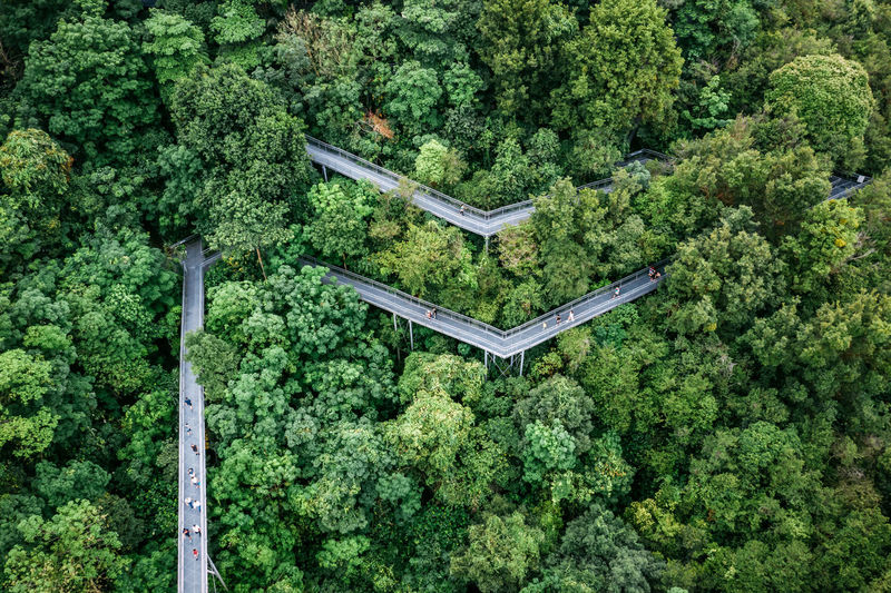 Aerial view of bridge amidst trees in forest