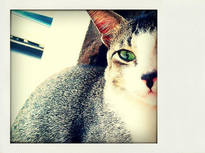 Eyeem Philippines Eyeem CDO Cat Green Eyes