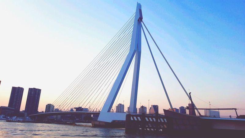 The Architect - 2016 EyeEm Awards Rotterdam Erasmusbrug Lifestyle We Heart It