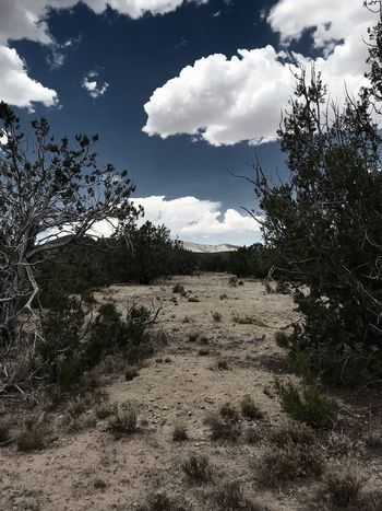 """""""Sinai Of The Southwest"""" The path opens, the clouds part, and the way to Gallinas is clear. New Mexico Skies New Mexico Photography New Mexico Path Junipers South West Clouds And Sky Clouds Mountain Sky Cloud - Sky Nature Day Land Landscape"""