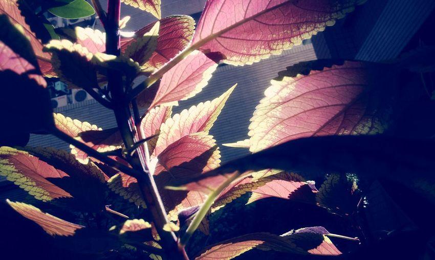 Flowers,Plants & Garden Watching Plants Grow Colorfulplants Enjoying Life
