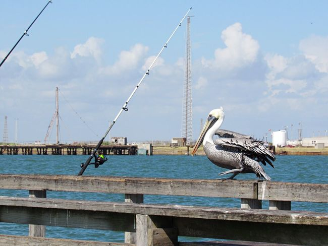 Port Aransas Texas Bird Animal Themes Animals In The Wild Animal Wildlife Sky One Animal Day Cloud - Sky Perching Built Structure Outdoors No People Nature Water White Stork Architecture