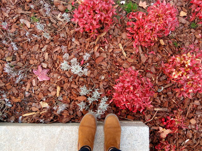 🍁🍁🍁🍁 Red Shoe One Person Personal Perspective Outdoors Autumn Leaf Day Multi Colored Beauty In Nature Colors Beauty Nature Colorful Growth Photography Shooting Autumn First Eyeem Photo Traveling Home For The Holidays