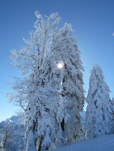 Snow And Sun In The Bavarian Mountains Beauty In Nature Blue Clarity Clear Sky Cold Cold Temperature Frozen Nature No People Outdoors Sky Snow Sunset Tree Winter Winter Sun