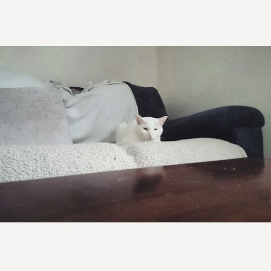 Cat Weird Wizzard Whitecat Couch lol..