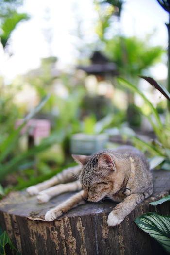 Cat sitting on wood