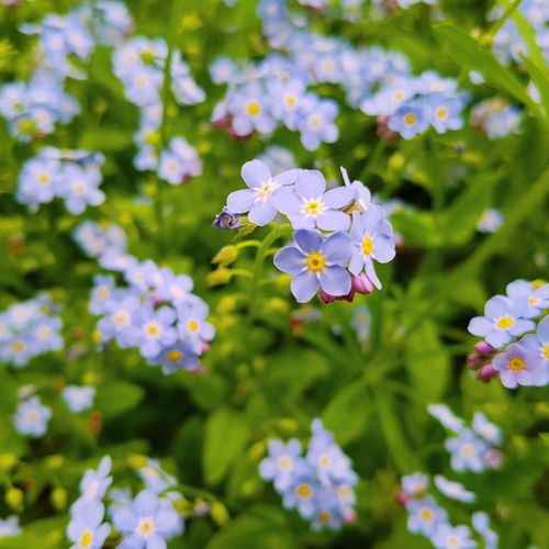 Close-up of flowers blooming in meadow