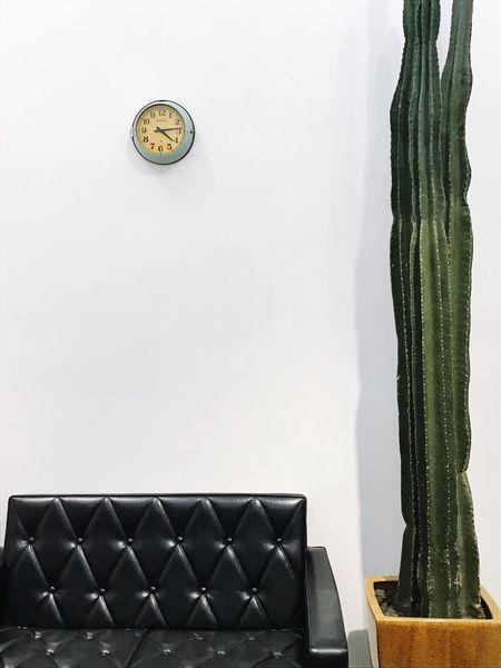 仙人掌 😚 Cacti Chair Sofa Wall Green Welcome Weekly