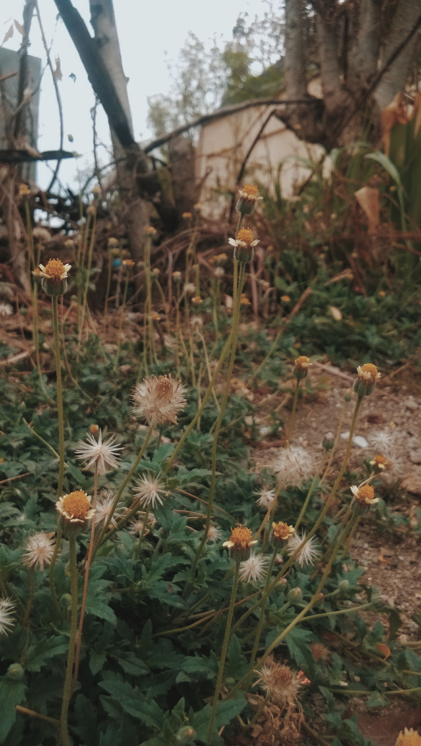 growth, plant, nature, flower, freshness, stem, leaf, field, beauty in nature, forest, fragility, growing, tranquility, day, close-up, uncultivated, outdoors, no people, grass, botany
