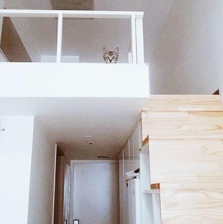 Mycat♥ SOJU Hide And Seek