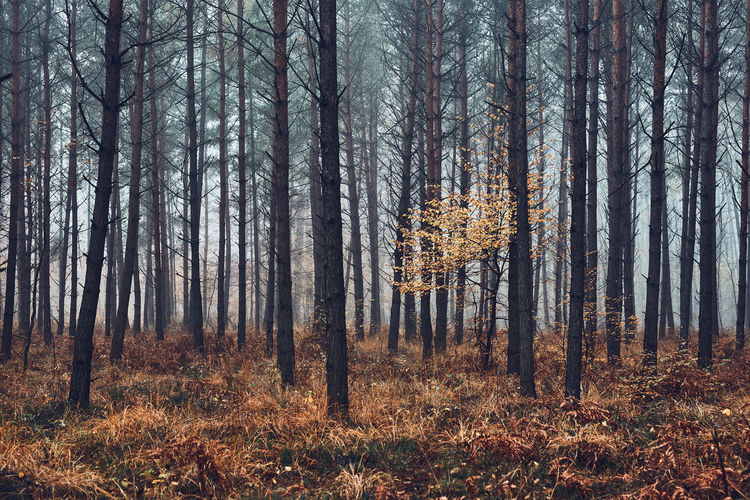Forest flooded with heavy fog. nature landscape view of foggy forest in autumn season