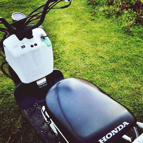 ZOOMER Riding Bike Travel