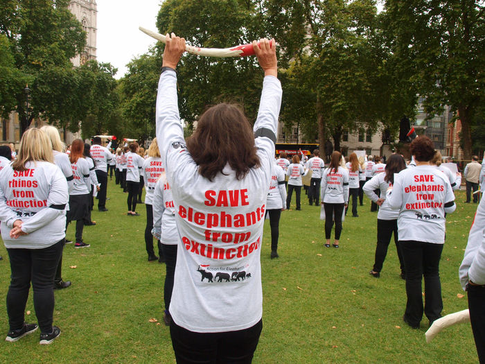 London GMFER Silent Protest. Demanding action for elephants. Parliament Green London, 07/10/2017 #actionforelephants Action For Elephants Endangered Species GMFER Olympus Photojournalism Protest Steve Merrick Environement Environmental Conservation London News News News Photography Parliament Green Protesters Stevesevilempire Zuiko