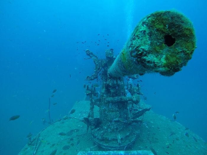 Gunnery Barrel Thailand Navy Shipwreck Boat Bubbles Growth Coral by Motorola Cannon Gun Diving Equipment Wreck Animals In The Wild Animal Themes Animal Marine Adventure Aquatic Sport Swimming Blue Scuba Diving