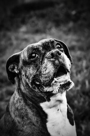 50+ Bulldog Pictures HD   Download Authentic Images on EyeEm