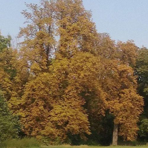 Nàdasladàny ,Autumn ,ősz Kert ,Kastélykert ,Gesztenye fa