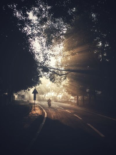 Light rays on a winter morning