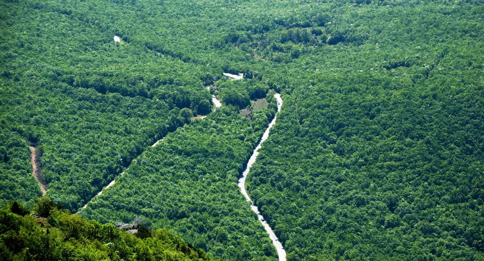 road to ohrid, national park galicica,macedonia Curves Lake Ohrid Macedonia National Park Road Aerial View Beauty In Nature Day Environment Galicica Green Color Growth High Angle View Land Landscape Nature Outdoors Plant Scenics - Nature Tranquility Tree