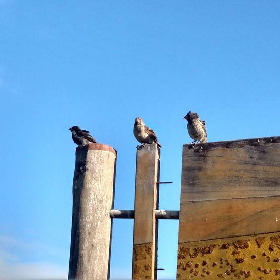 Talking Bird Animal Wildlife No People Animal Themes Day Outdoors Animals In The Wild