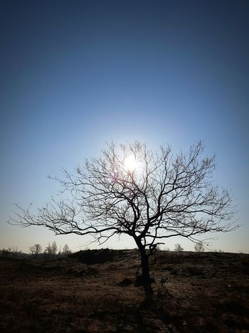 Favorite... Spring Trees Hugging A Tree Landscape Samsungphotography Galaxys7 Nature Nature_collection TreePorn Tree_collection  Sun Silhouette Sky Skyporn