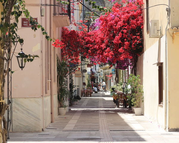 Architecture Beauty In Nature Bougainvillea Bouganville Flower Building Exterior Built Structure City Day Flower Footpath Freshness Greece Growth Nafplio Nafplio City💙 Nafplion Nafplion, Argolis Nature Outdoors Peloponesse PicturePerfect Picturesque Plant Street Tree