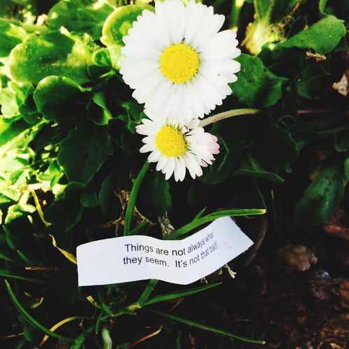 """I was on a walk today when I randomly noticed this fortune on the ground: """"things are not always what they seem, it's not that bad!"""""""