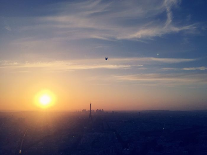 Silhouette bird flying above cityscape at sunset