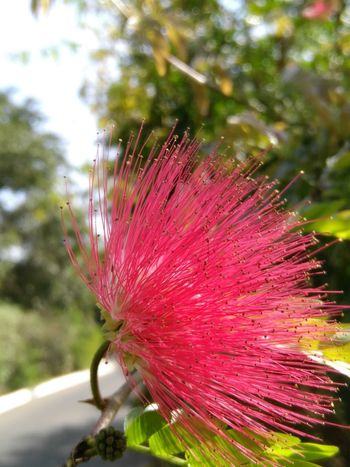Nature Red Beauty In Nature Fragility Springtime Flower Head No People Day Outdoors Freshness Plant