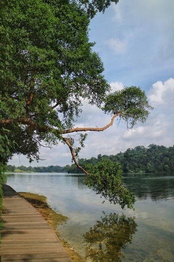 Macritchie Nature Trail Beauty In Nature Landscape Nature Nparks Nparksbuzz Reservoir Scenics Sky Tranquil Scene Tranquility Tree Water