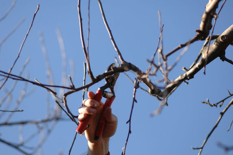 Low Angle View Of Hand Cutting Bare Tree Branch Against Blue Sky