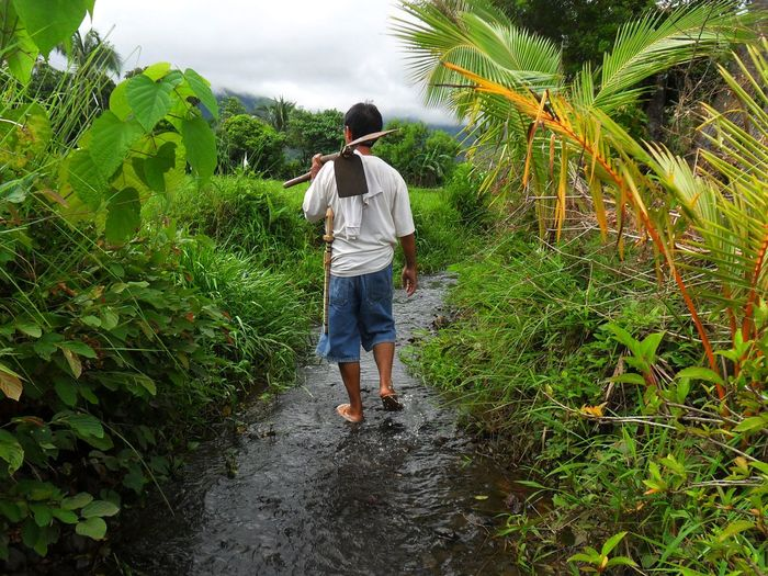 Rear view of farmer holding shovels while walking on stream amidst plants