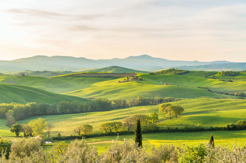 Rural morning landscape with fields and hills Country Farmland Morning Light Tuscany Agriculture Beauty In Nature Countryside Farm Field Hill Hills And Valleys Idyllic Idyllic Scenery Italy Landscape Nature No People Outdoors Rolling Landscape Rural Scene Scenics Sky Tree Val D'orcia Valley