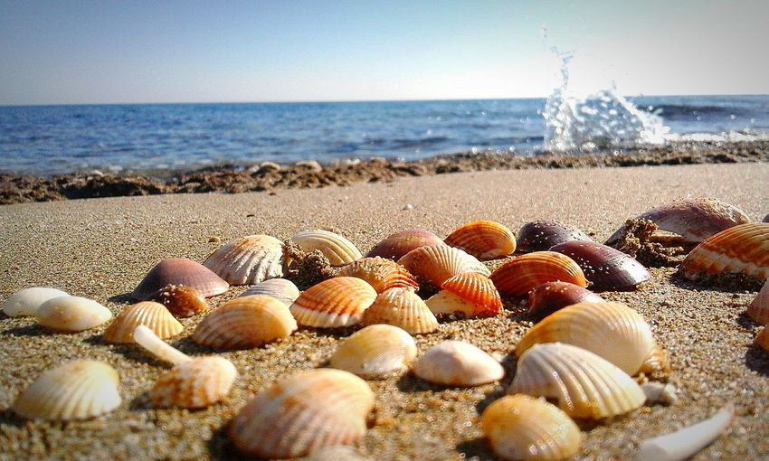 Phone photo- telefon cekimi 😊 Iskele Sea No People Sea Life Beach Sand Water Nature Horizon Over Water Beauty In Nature Coastline Outdoors Relaxation Tranquility Vacations Scenics Travel Destinations Tranquil Scene Sky Pebble DaySea Shells Sea Shell Photography Photography Sand & Sea