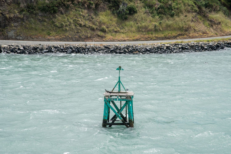 Dunedin,Otago,New Zealand-December 12,2016: Sea buoy with cormorants and coastal road and greenery in Dunedin, New Zealand Cormorant  Dunedin Road Animal Animal Themes Animals In The Wild Bird Coastal Countryside Forest Lush - Description Nature New Zealand Non-urban Scene Otago Peninsula Protection Safety Scenics - Nature Sea Security South Island Water Waterfront Wildlife