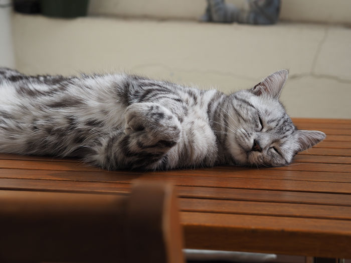 Cat Relaxation
