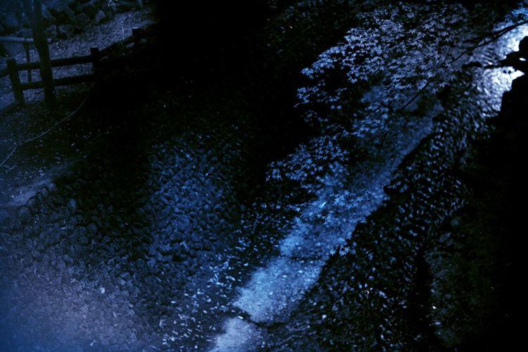 現像失敗でも逆に良い感じ Blackandwhite Light And Shadow Taking Photos Enjoying Life Hello World Film Photography 京都 Acros100 モノクロフィルム BESSA-T ELMARIT-M 28mm F2.8 EyeEm Nature Lover