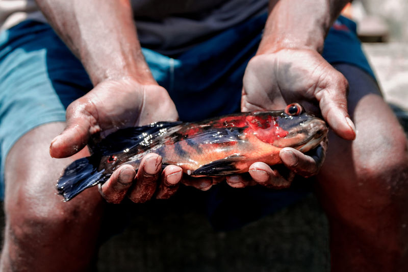 Close-up Day Fish Fisherman Focus On Foreground Front View Hand Holding Human Body Part Human Hand Lifestyles Men Midsection One Person Outdoors Real People Seafood