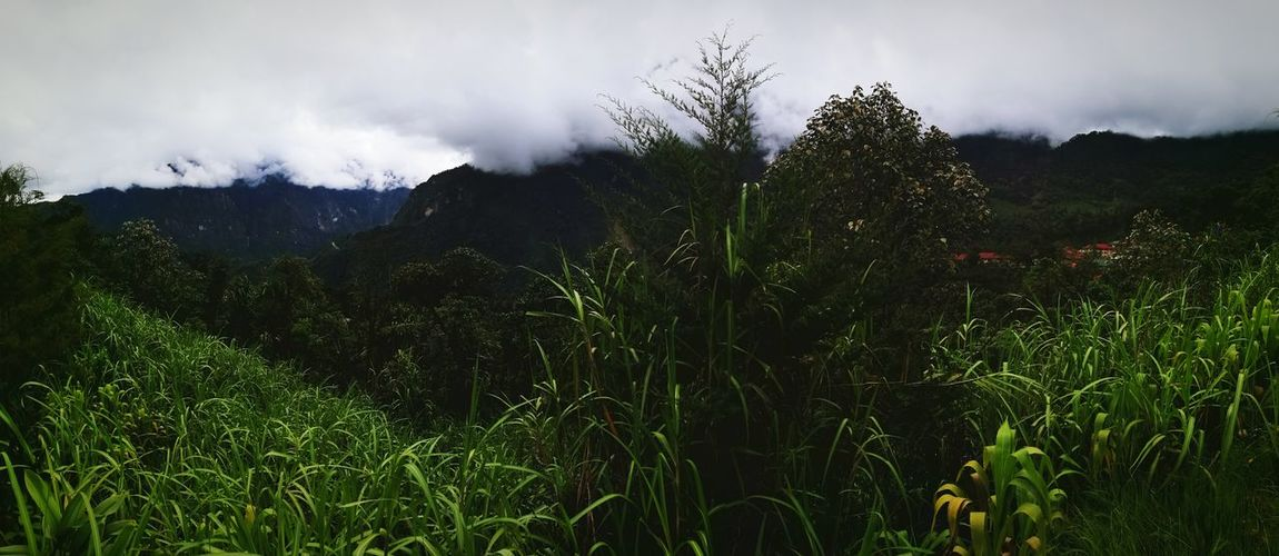 View over Hidden Valley as the clouds come down Mountain Jungle Growth Nature Green Color No People Outdoors Sky Day Clouds