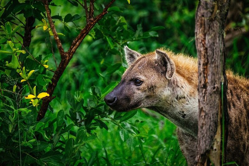 Close-up of hyena by plants in forest