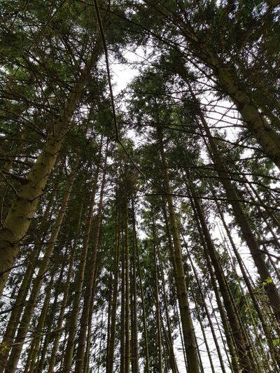 Fragility Trees