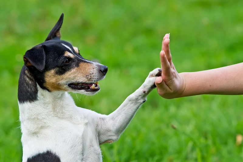 Give me five - Dog pressing his paw against a woman hand Woman Animal Themes Close-up Day Dog Domestic Animals Field Focus On Foreground Give Me Five Grass Green Color Hand Human Body Part Human Hand Mammal Nature One Animal One Person Outdoors Paw Pets Real People