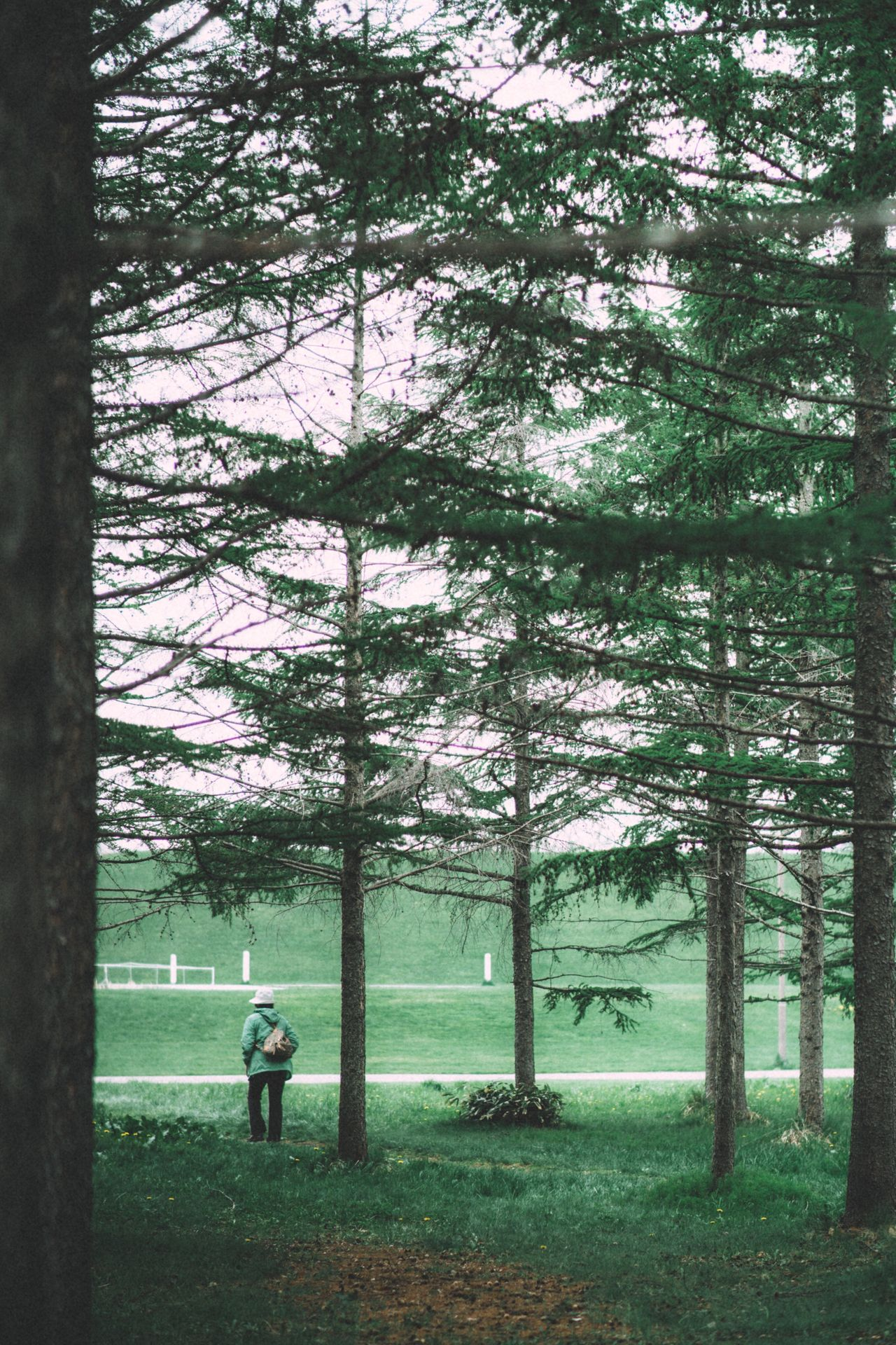 REAR VIEW OF WOMAN IN PARK WITH TREES IN BACKGROUND