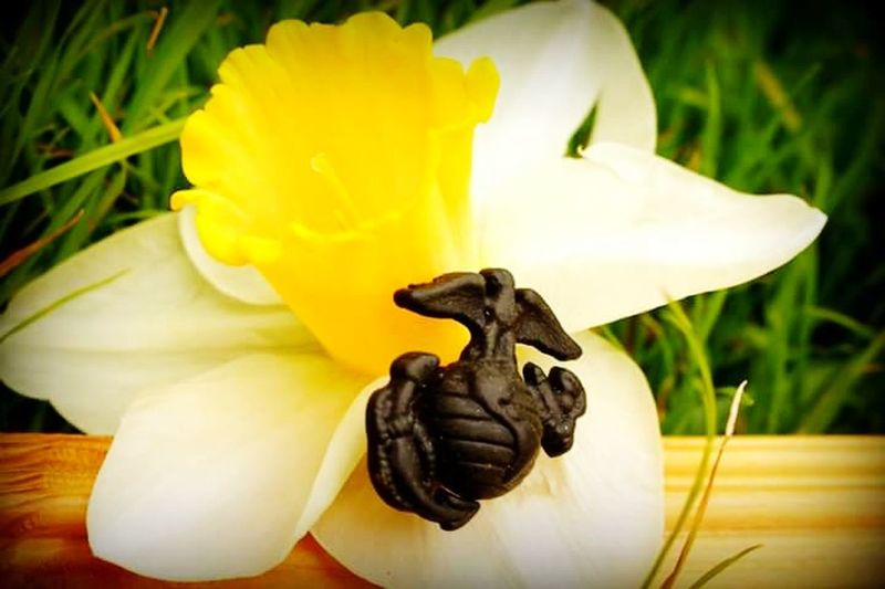 Marine corp army military love Marines Marine No People Indoors  Easter Flower Close-up Day Freshness Nature Flower Head
