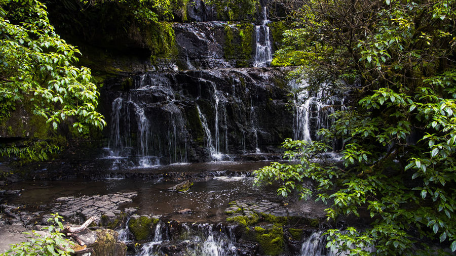 Purakaunui Falls, the Catlins, NZ at the height of summer. These are more spectacular when the river is full. New Zealand Landscape Beauty In Nature Day Forest Nature No People Outdoors Plant Scenics Travel Destinations Tree Water Waterfall