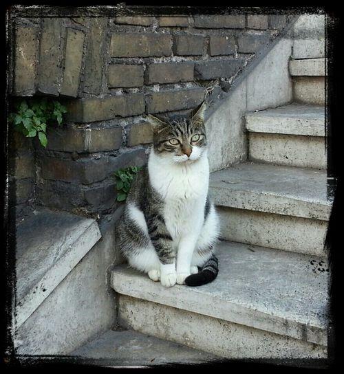 Beautiful cat-model! Cats Rome Cats Of Rome Cat