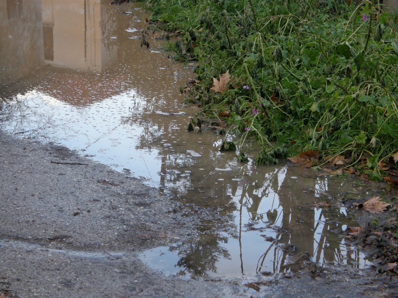 water, reflection, nature, puddle, outdoors, no people, plant, flood, day