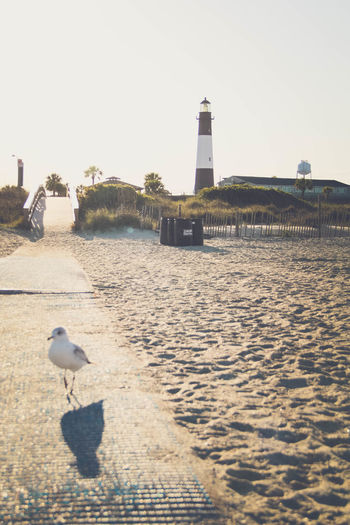 Beach Lighthouse Nature Outdoors Sand Seagull Shadow Tranquil Scene Tranquility