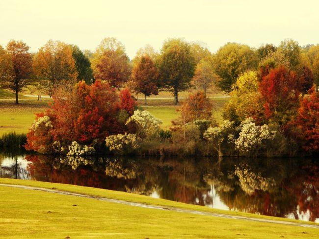 Tree Autumn Rural Scene Agriculture Field Sunlight Sky Grass Landscape Green Color
