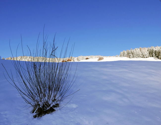 Blue Clear Sky Cold Temperature Frozen Nature Scenics Snow Tranquil Scene Tranquility Val Pusteria Winter